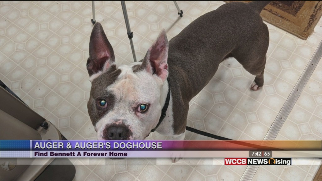Auger & Auger's Doghouse: Meet Bennett!