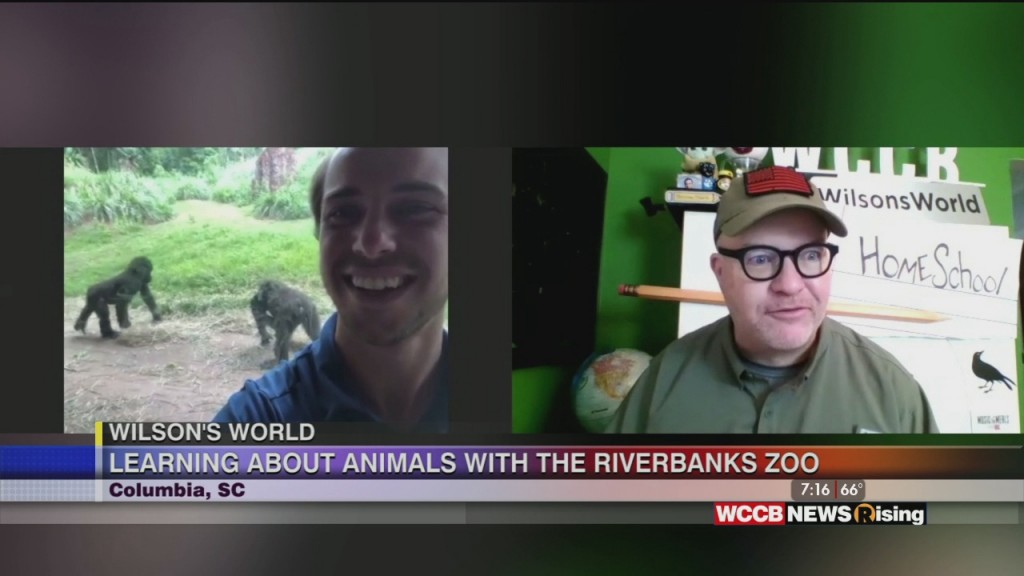 Wilson's World: Getting A Homeschool Lesson From The Riverbanks Zoo In Columbia