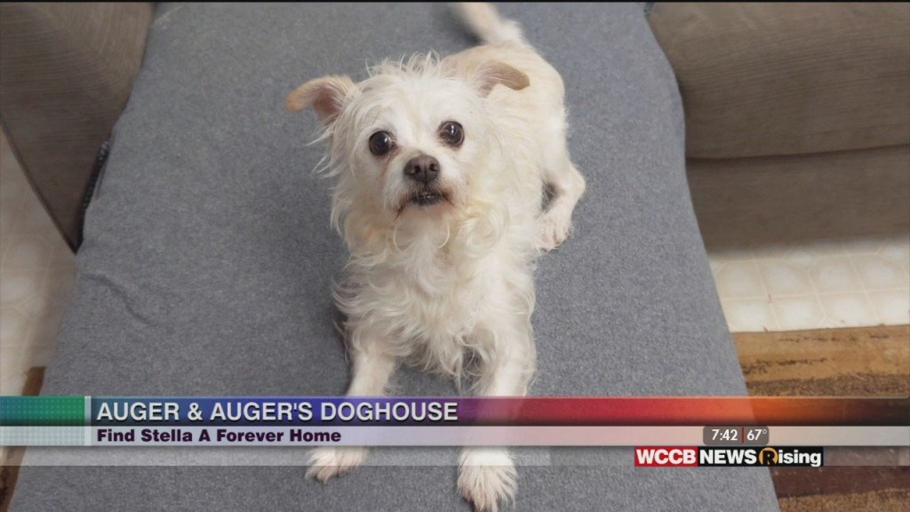 Auger & Auger's Doghouse: Meet Stella!