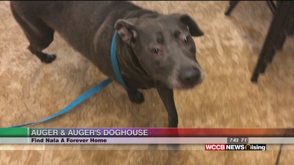 Auger & Auger's Doghouse: Meet Nala!