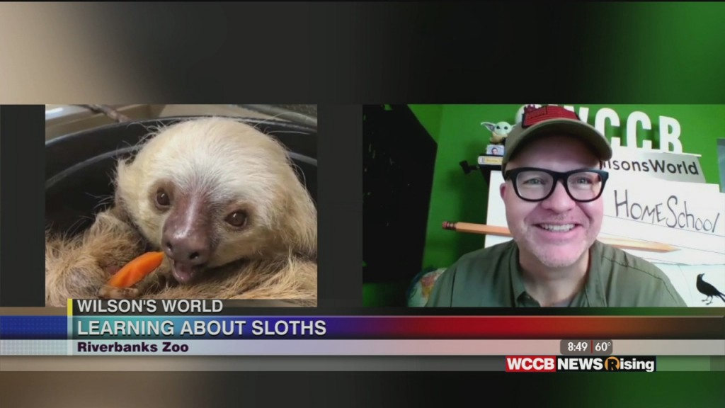 Wilson's World: Learning About Sloths With Riverbanks Zoo!