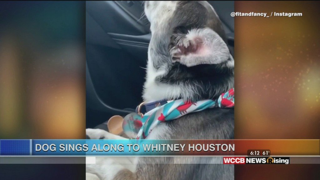 Viral Videos: Dog Hits High Note & Ice Cube Tray Hack