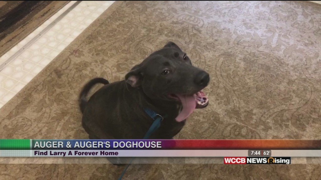 Auger & Auger's Doghouse: Meet Larry!