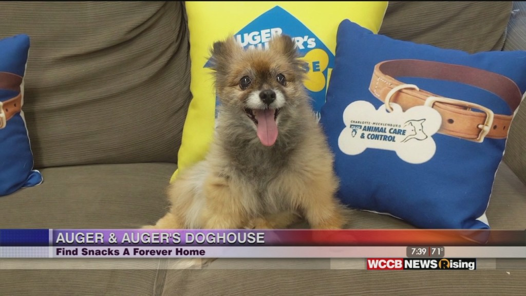 Auger & Auger's Doghouse: Meet Snacks!