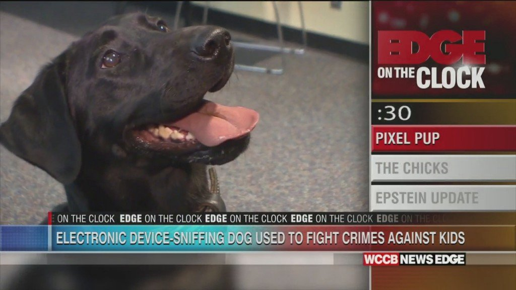 Electronic Device Sniffing Dogs Use To Fight Crimes Against Kids