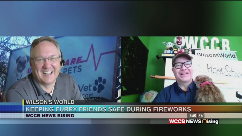 Wilson's World: Keeping Your Dog Safe & Calm During 4th Of July Fireworks