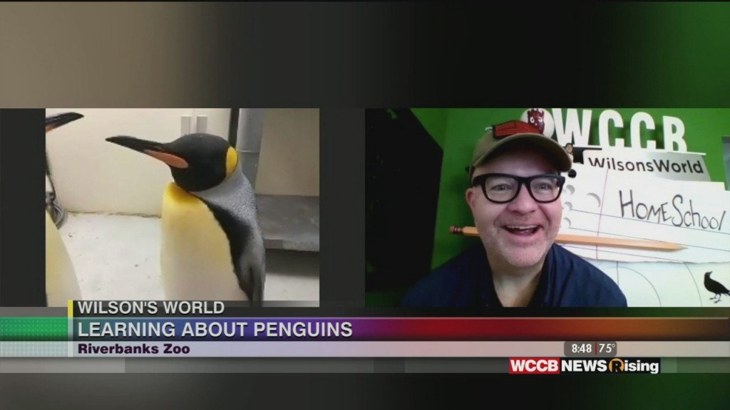 Wilson's World: Cuteness Overload With The Penquins At The Riverbanks Zoo