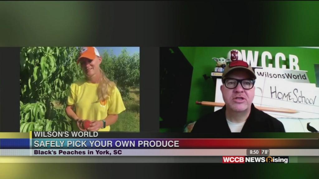 Wilson's World: Heading To Black's Farm To Pick Fresh Produce