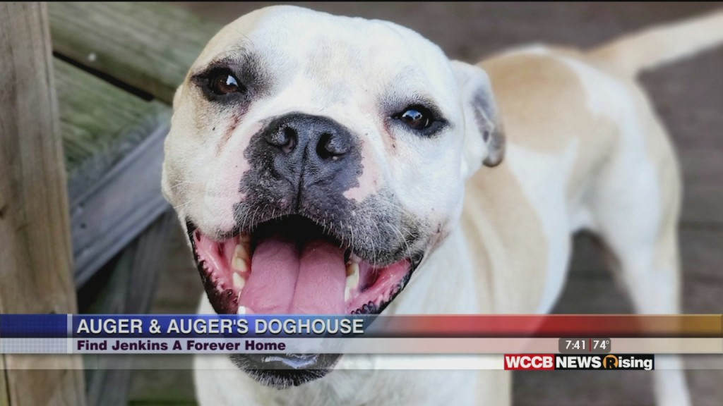Auger & Auger's Doghouse: Meet Jenkins!