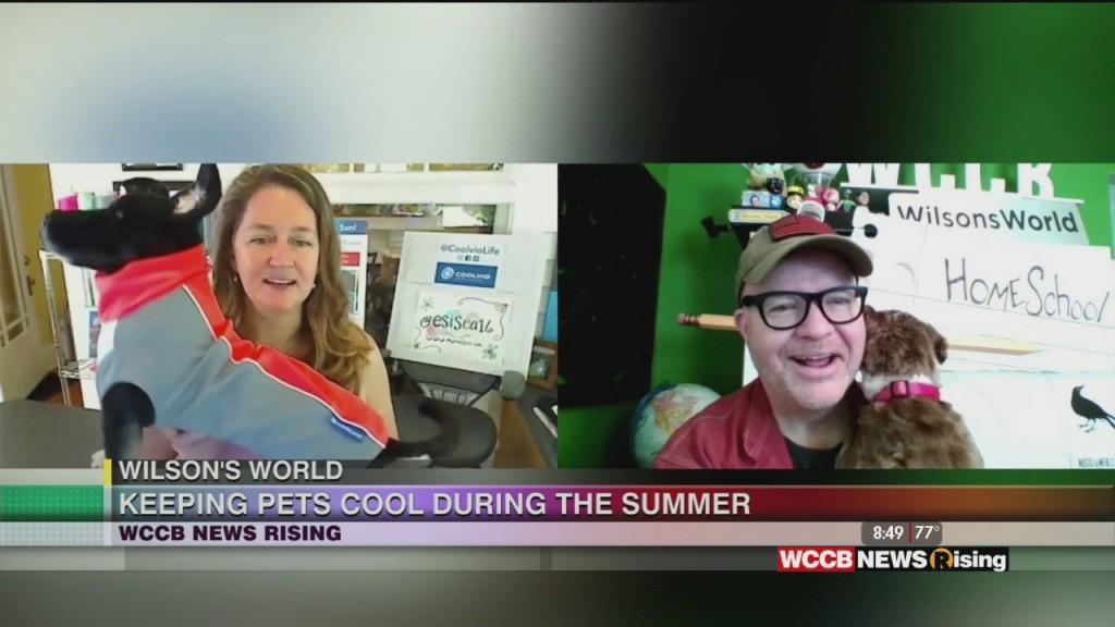 Wilson's World: Getting An Update On Local Small Business, Coolvio