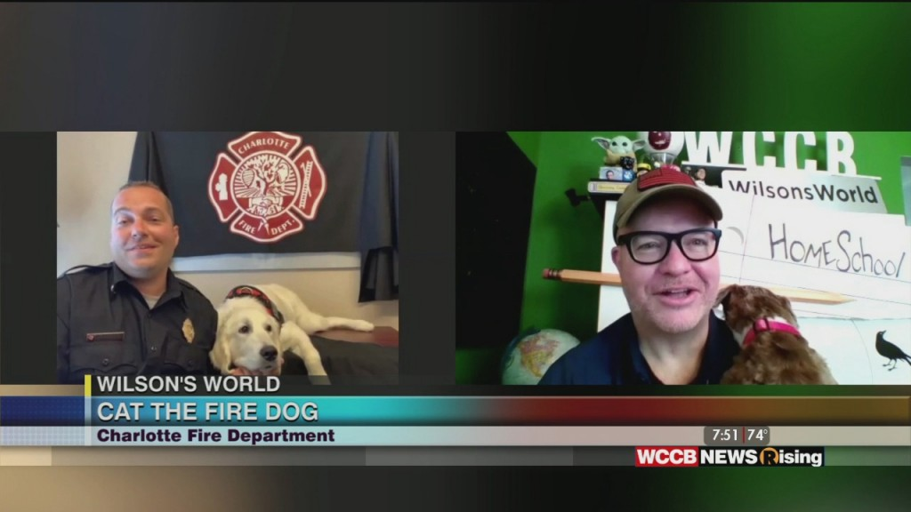 """Wilson's World: Checking In With Charlotte Fire Department's Newest """"fire Dog"""""""
