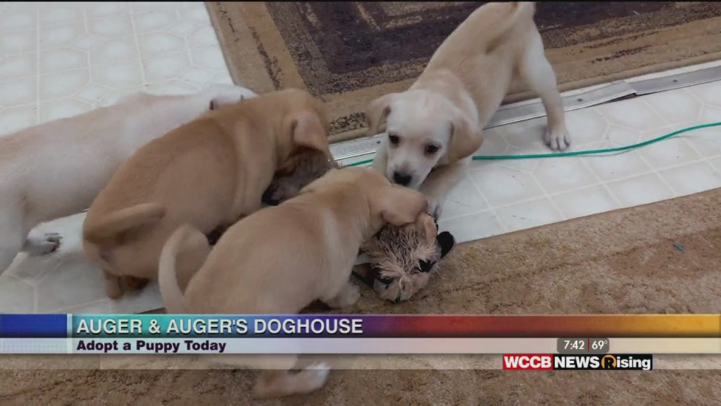 Auger & Auger's Doghouse: Adopt A Puppy Today!