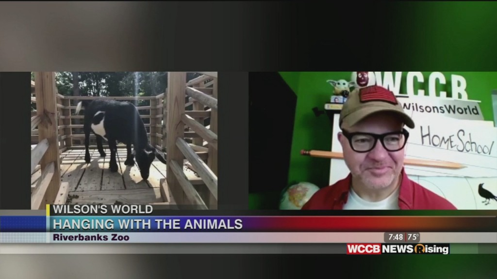 Wilson's World: Heading Out To The Farm Yard Area With The Goats At The Riverbanks Zoo