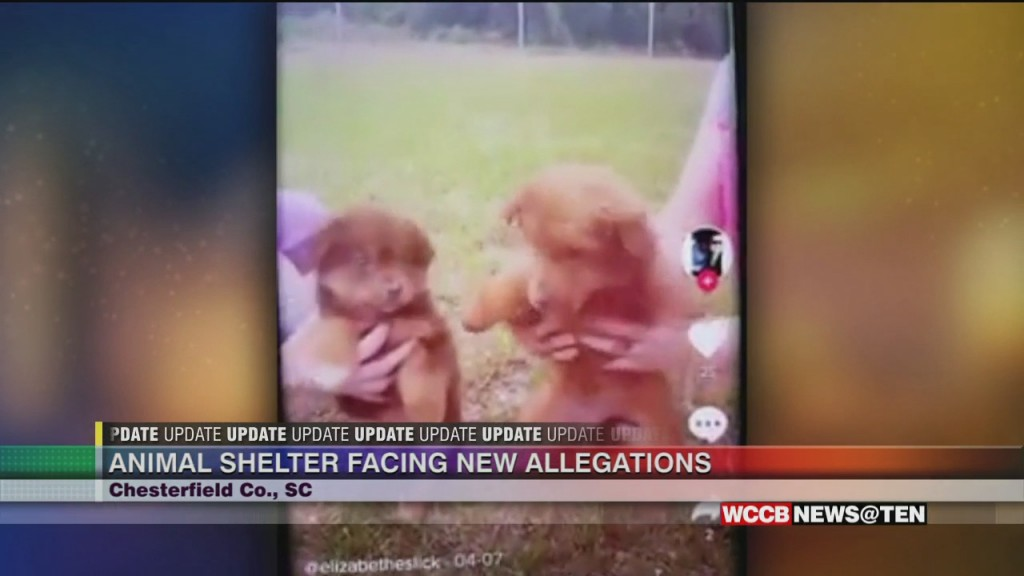 New Allegations Against Local Animal Shelter