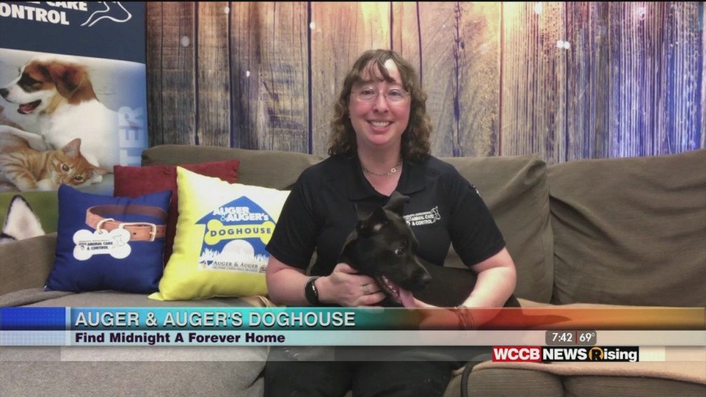 Auger & Auger's Doghouse: Meet Midnight!