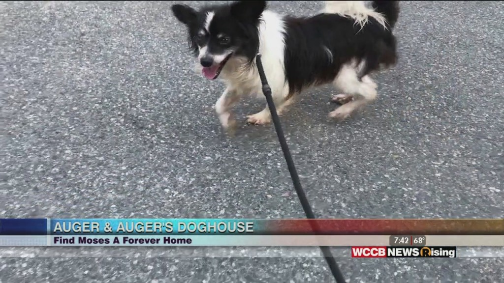 Auger & Auger's Doghouse: Meet Moses!