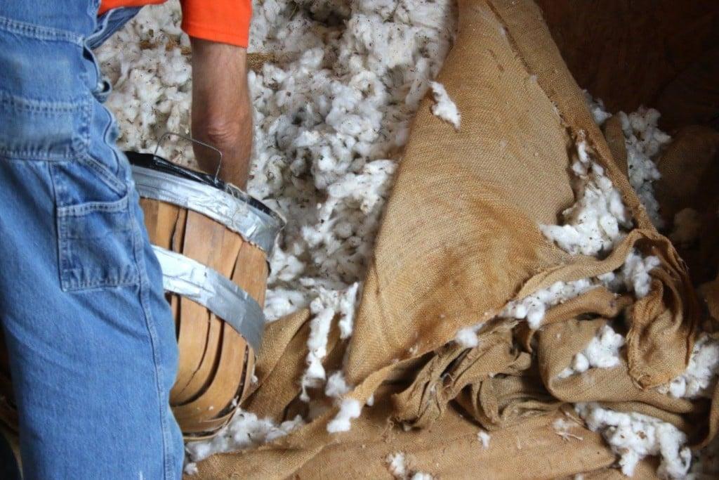 Cotton Ginning Days 5