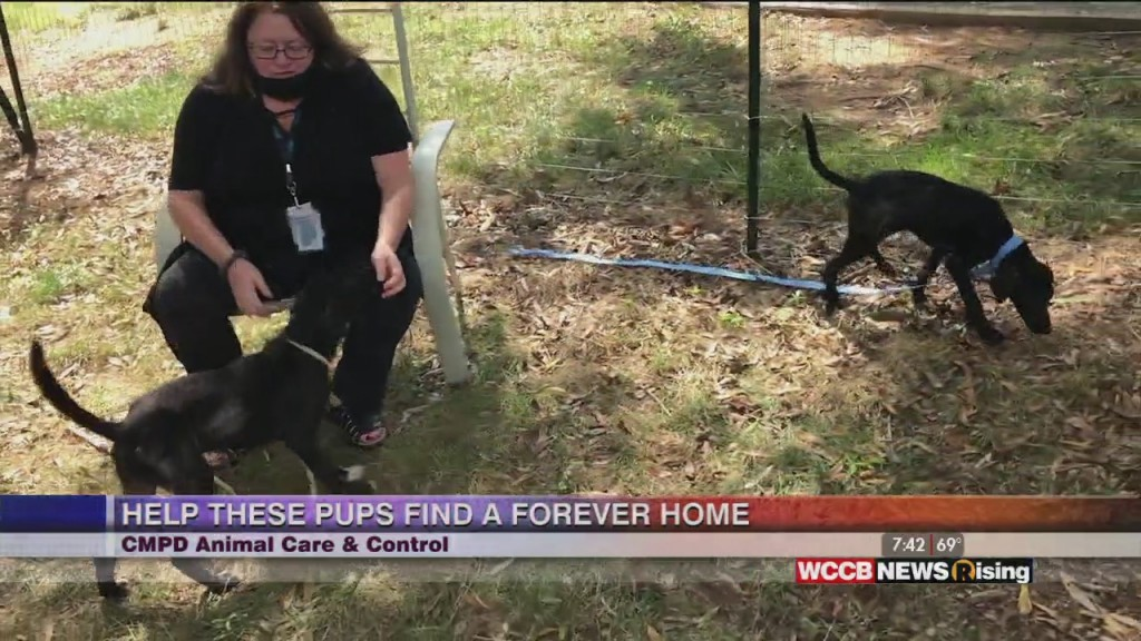 Auger & Auger's Doghouse: Puppies For Adoption