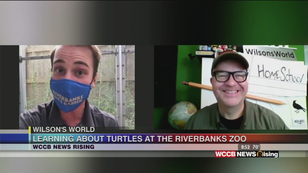 Wilson's World Homeschool: Learning About Turtles At Riverbanks Zoo