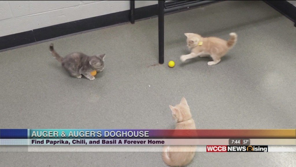 Auger & Auger's Doghouse: Meet Kittens Paprika, Chili, And Basil