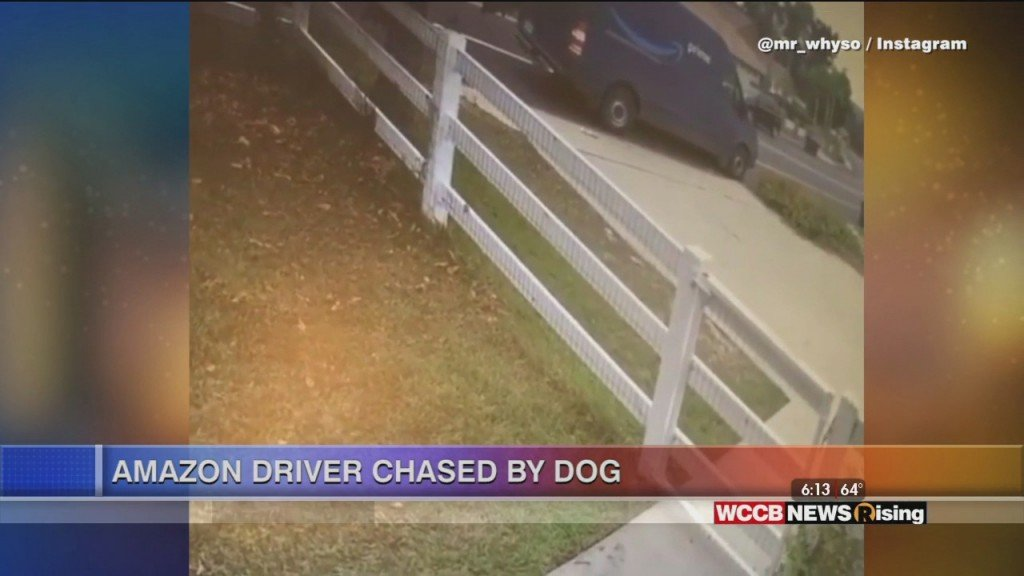 Viral Videos: Amazon Driver Chase By Dog And Robby Anderson Learns About Sir Purr