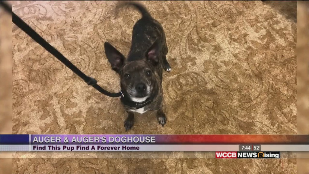 Auger & Auger's Doghouse: Find This Pup A Forever Home