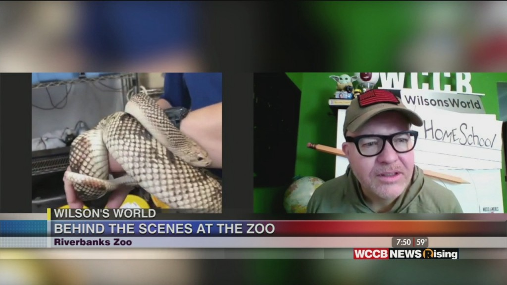 Wilson's World Homeschool: Getting An Up Close Look At The Northern Pine Snakes At The Riverbanks Zoo