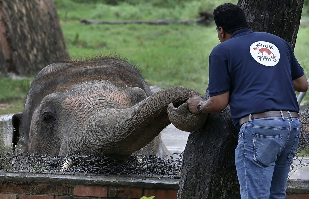 A Veterinary From The International Animal Welfare Organization 'four Paws' Offers Comfort To An Elephant Named 'kaavan' Prior To His Examination At The Maragzar Zoo In Islamabad, Pakistan