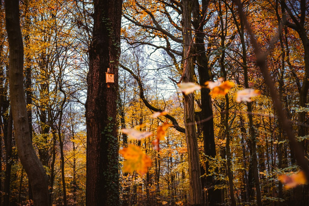 Fall, Golden Autumn Forest With Wooden Birdhouse On A Tree. Autumn Concept
