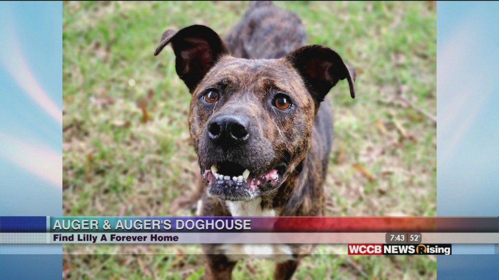 Auger And Auger's Doghouse: Meet Lilly