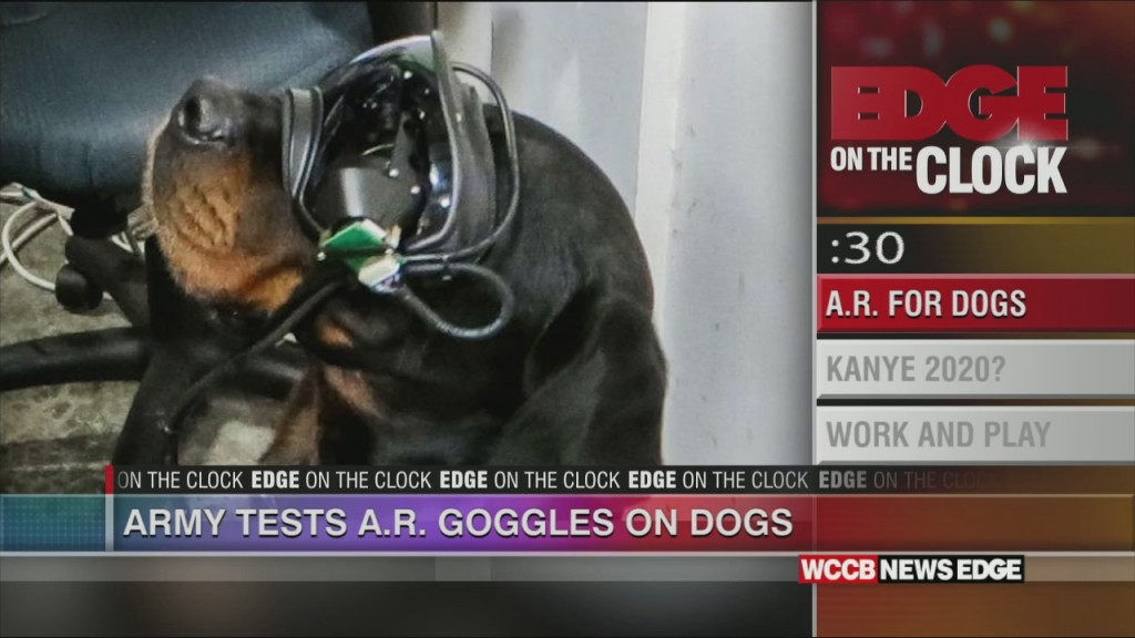 Ar For The Dogs