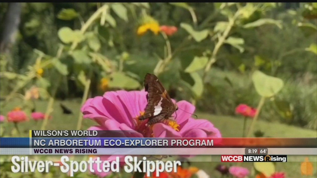 Wilson's World Homeschool: Learning More About The Eco Explorer Program At The Nc Arboretum