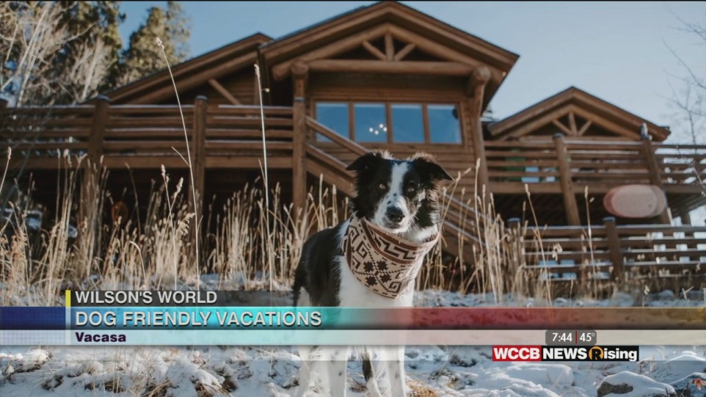 Wilson's World: Vacasa Show Us Where We Can Enjoy A Vacation With Our Canine Companion
