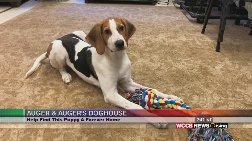 Auger & Auger's Doghouse: Help Find This Pup A Forever Home