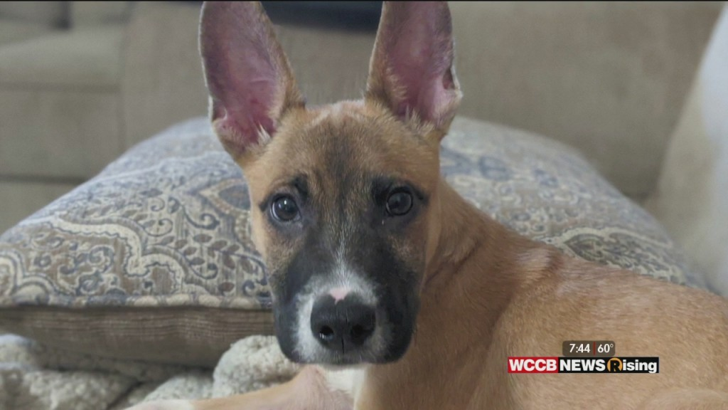 Auger & Auger's Doghouse: Help Find This Puppy A Forever Home