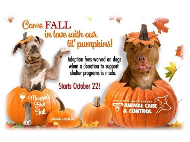 Cmpdacc Pumpkin Program