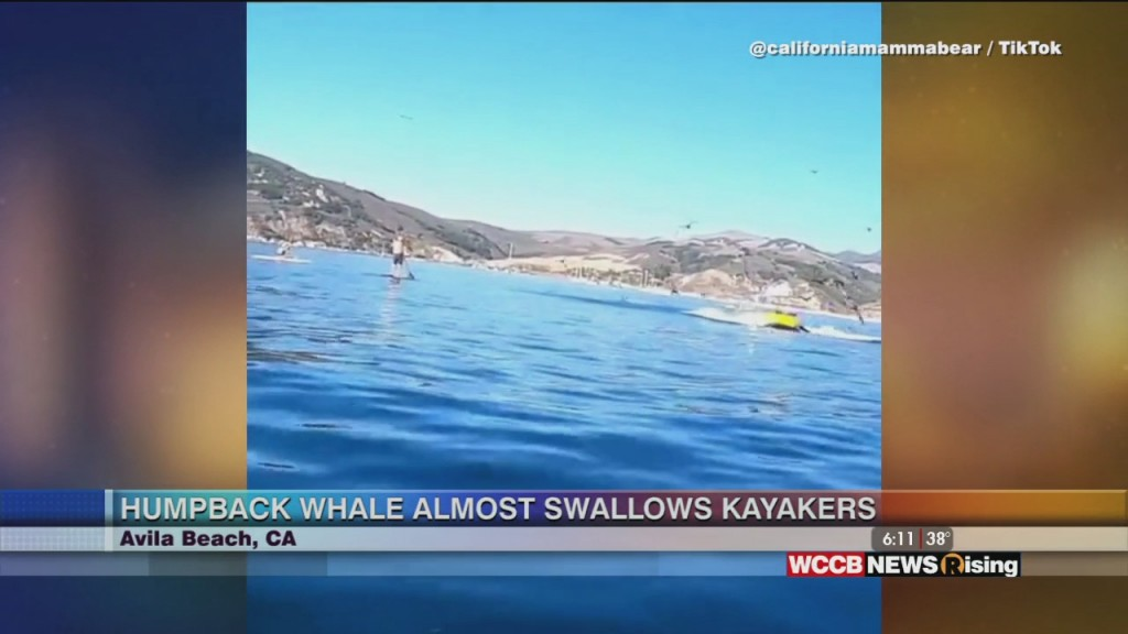 Viral Videos: Humpback Whale Almost Swallows Kayakers & Dad Takes Motivation To Whole New Level