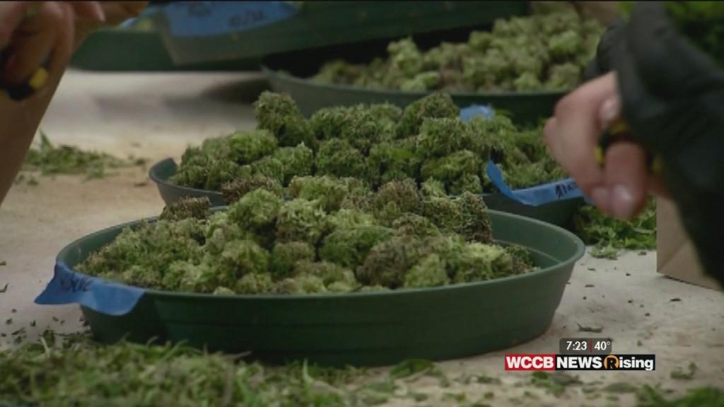 Cannabis A Big Winner On Election Night. Where Do The Carolinas Stand?