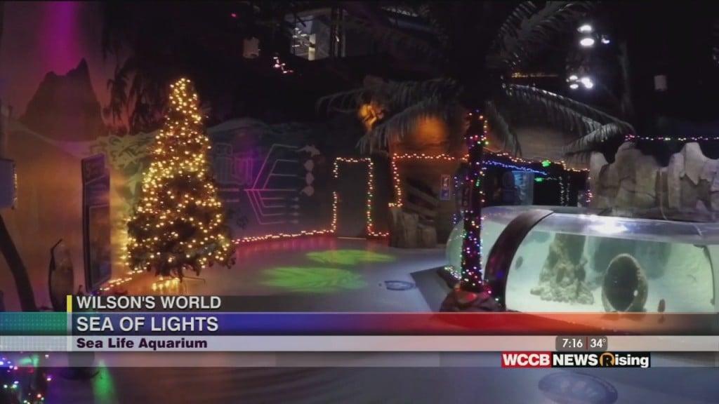 Wilson's World: Viewing The Sea Life Aquarium's Holiday Sea Of Lights