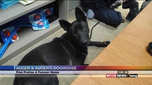 Auger & Auger's Doghouse: Meet Praline