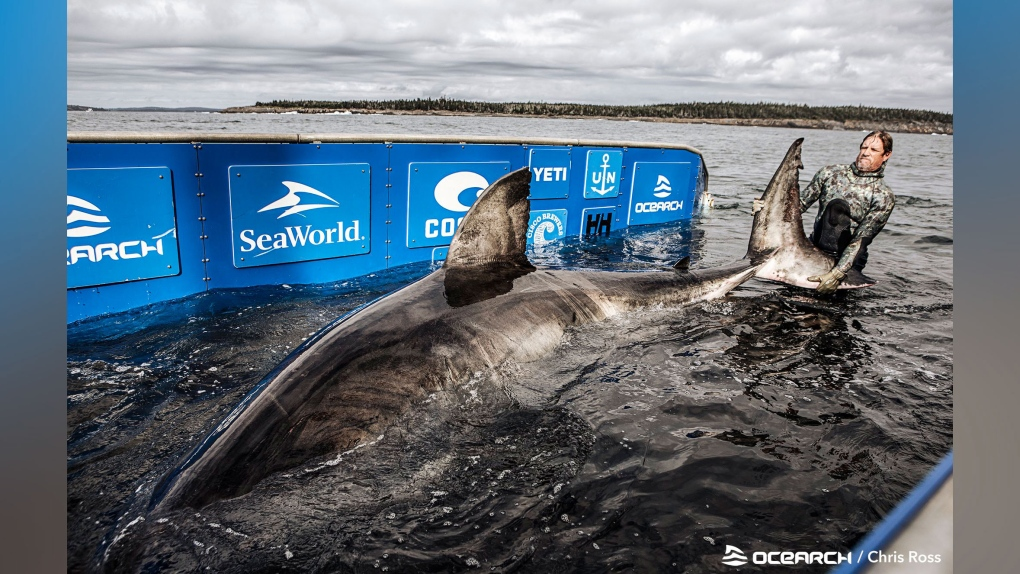 OCEARCH picture of Nukumi