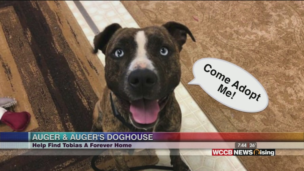 Auger & Auger's Doghouse: Meet Tobias!