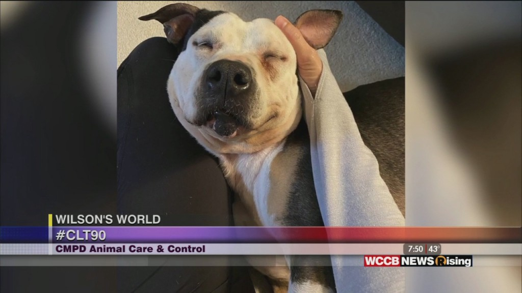 Wilson's World: Cmpd Animal Care & Control Working To Reach Their Adoption Goal For 2020