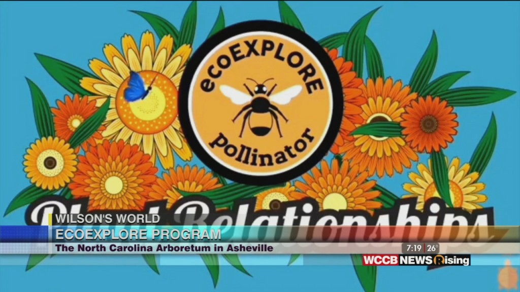Wilson's World Homeschool: Learning About Plant Pollination While Catching Up On The Eco Explore Program At The Nc Arboretum