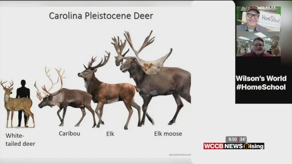 Wilson's World Homeschool: Learning For About Deer, Elk, Caribou, And Santa's Reindeer