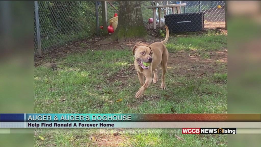 Auger & Auger's Doghouse: Meet Ronald!