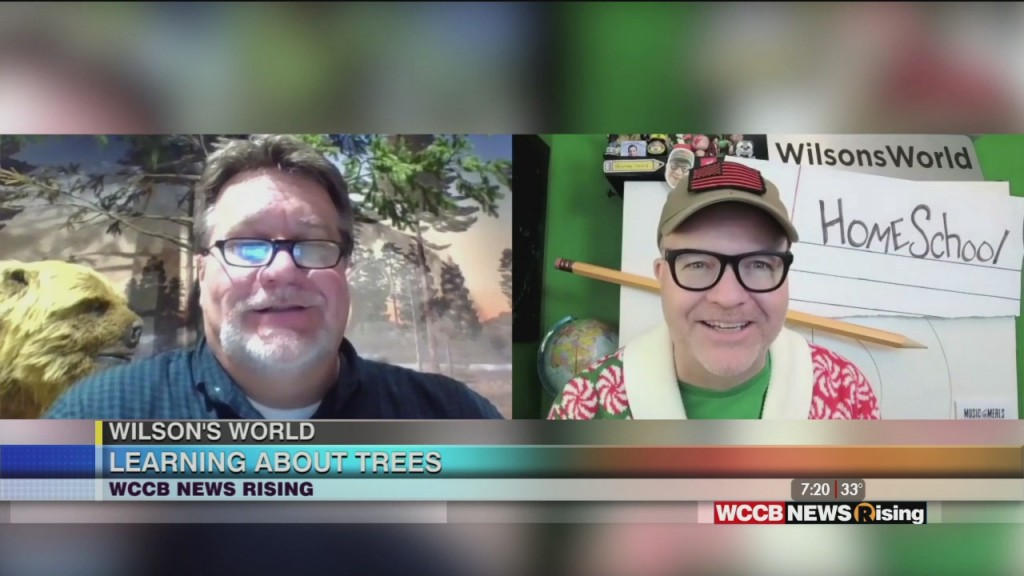 Wilson's World Homeschool: Learning About Trees With Dr. Steve