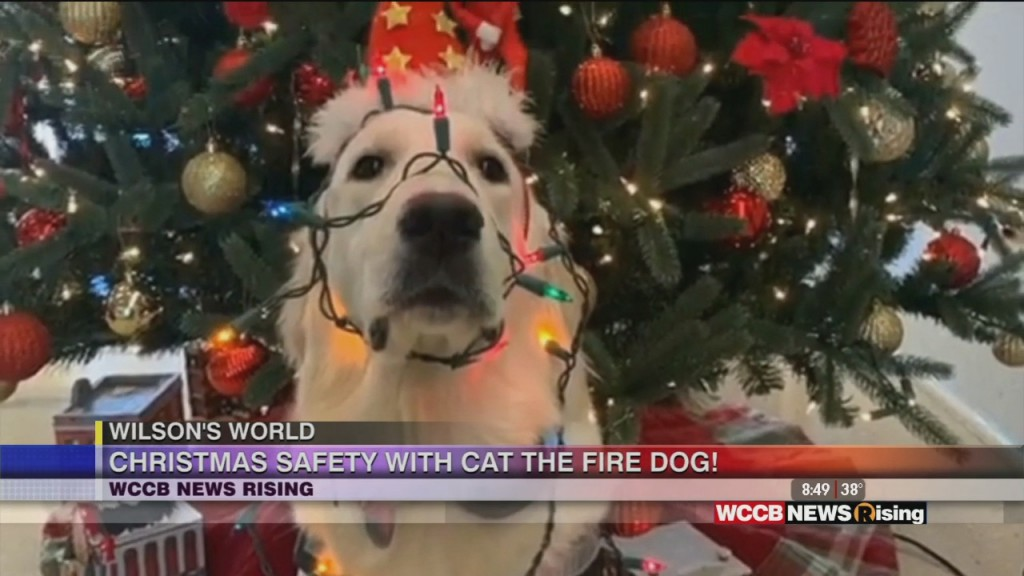 Wilson's World: Christmas Safety And More With Cat The Fire Dog!