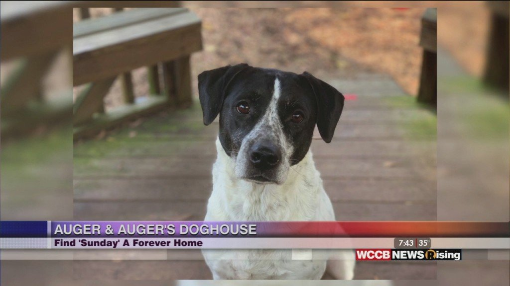 Auger & Auger's Doghouse: Meet Sunday!