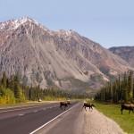 Moose Test